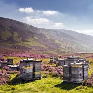 Пчелиные улья в поле